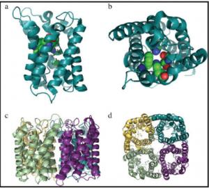 Aquaporin Biomimetic Membranes